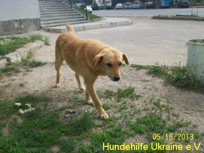 ruschuk_mai20123-2