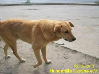 ruschuk_mai20123-3
