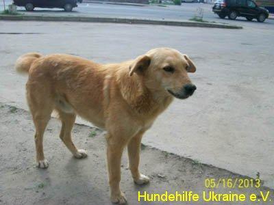 ruschuk_mai20123-4