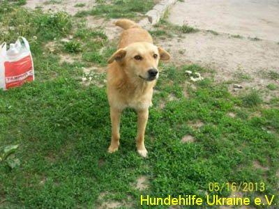 ruschuk_mai20123-6
