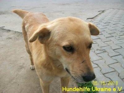 ruschuk_mai20123-8