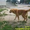 ruschuk_mai20123-5