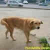 ruschuk_mai20123-7