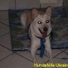 linadiara_juni2015-3