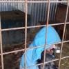 Arbeit im Tierheim2