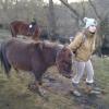 Pferd8