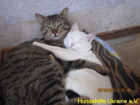 barsikii_7_mai2013