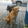 ruschuk4_nov2013