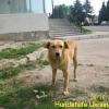 ruschuk_mai20123-1