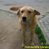 ruschuk_mai20123-9