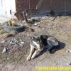 yulja-2_april2015-5
