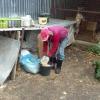Arbeit im Tierheim