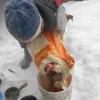 Winter-Trockenfutter13
