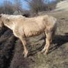 Pferd10