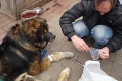 hund_5
